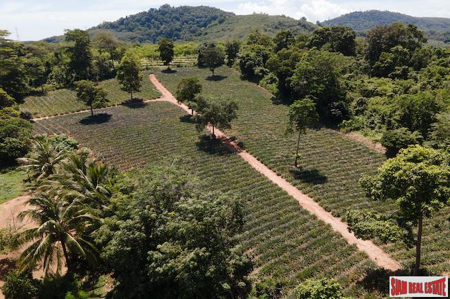 Mai Khao land for sale 4