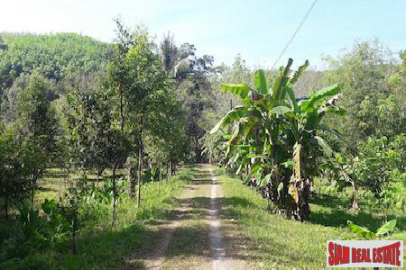 Large Land Plot with Rubber Plantation and Fruit Trees in Phang Nga