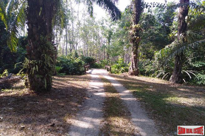 Lush Tropical Land for Sale in Phang Nga, Souther Thailand