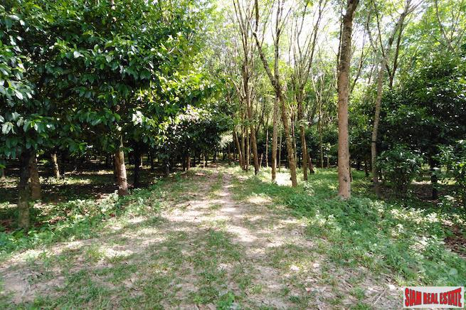 Large 16 Rai Land Plot Covered with Mangostene and a Rubber Tree Plantation in Phang Nga