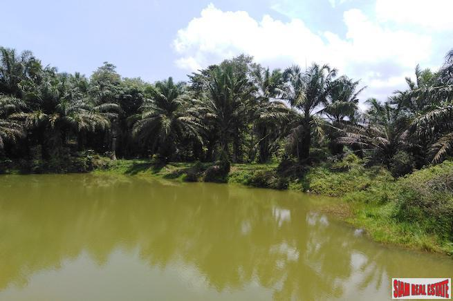 Large Land Plot with Lake and Palm Plantation North of Khao Lak