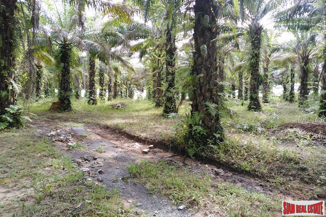 Large Land Plot for Sale with Palm and Rubber Plantation