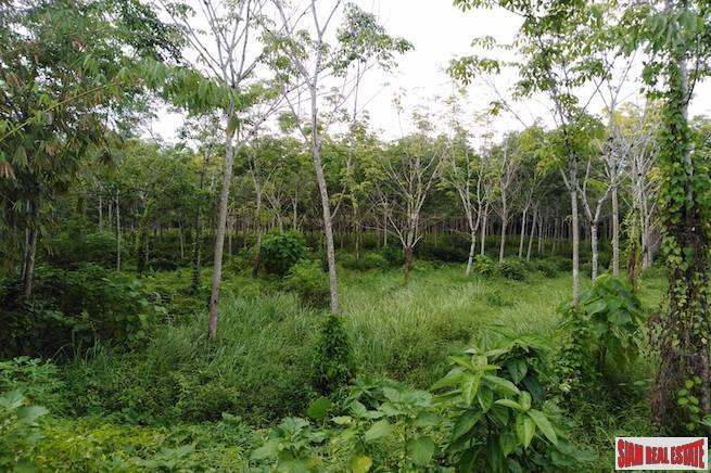 Large Land Plot for Sale with Rubber Plantation Only 10 minutes from Phang Nga Town