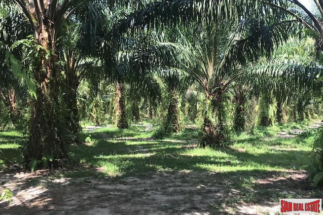 96 Rai of Palm Planation Land  for Sale in Tay Muang, Phang Nga