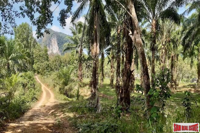 Rubber Plantation on over 6 Rai of Land for Sale in Krabi