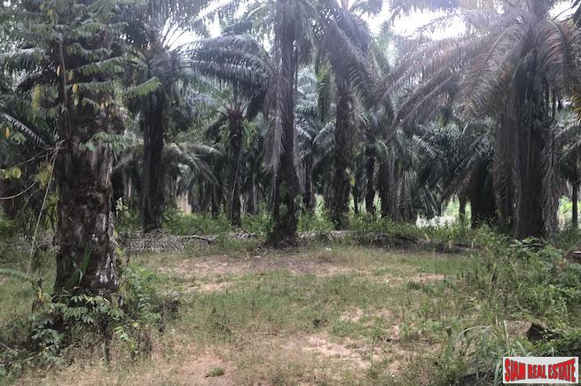 Large 10 Rai Palm Plantation for Sale in Krabi, Southern Thailand