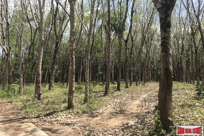 Over 6 Rai of Flat Land for Sale  in Takua Thang, Phang Nga