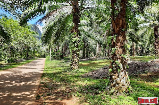 Large Land Plot  in Quiet Nong Thaley Area for Sale with Palm Tree Plantation