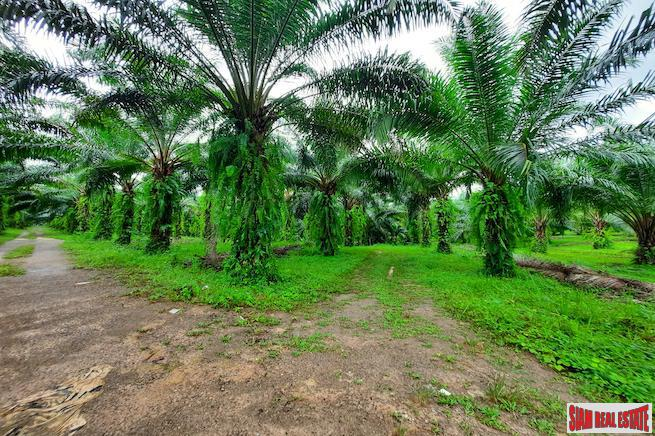 Over 111 Rai of Land with Large Palm Plantation for Sale in Ao Leuk, Krabi