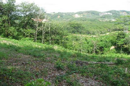 11.5 Rai of Hillside Land For Sale at Layan, Phuket