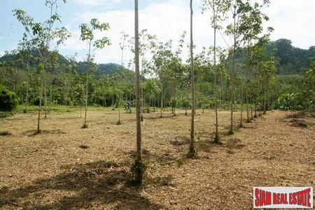 Two and half  Rai of Unspoilt Land in a Peaceful Area of Thalang