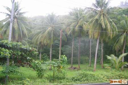 14 Rai Hillside land in Panwa